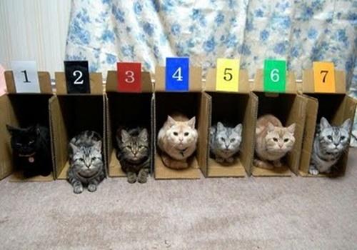 パドック風猫ハウス。