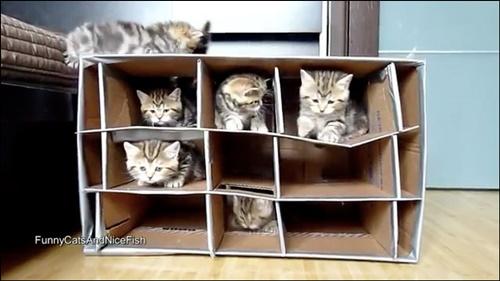 ダンボール型猫マンション!