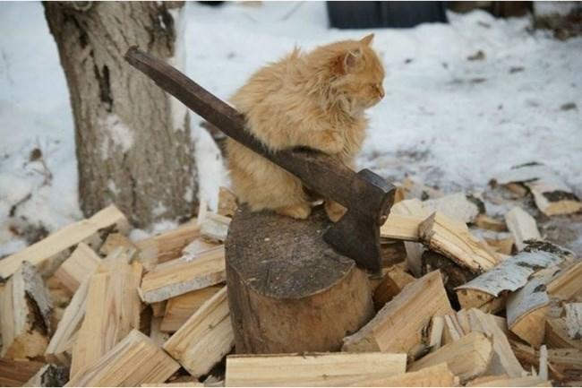 大量の薪割りを完了した猫。
