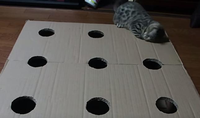 すばしっこいもぐら役の子猫。