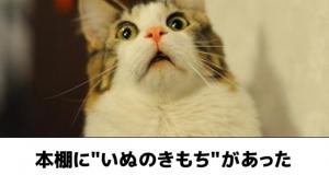 猫のボケて30選!