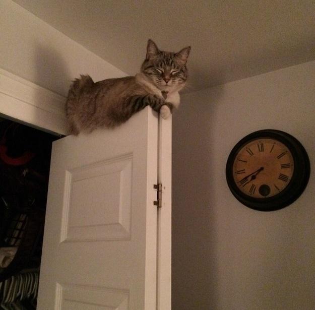 変なとこで寝る猫。