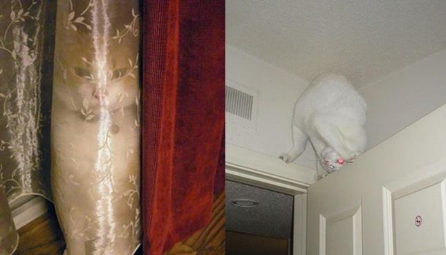 忍者猫の画像集。