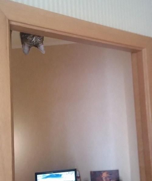壁に耳あり天井に猫あり。