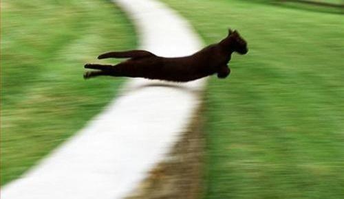 猫が飛び越える瞬間を激写。