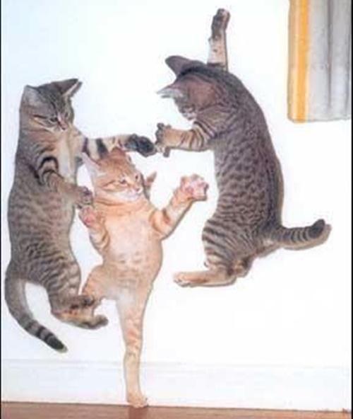 猫まつり開催中!?