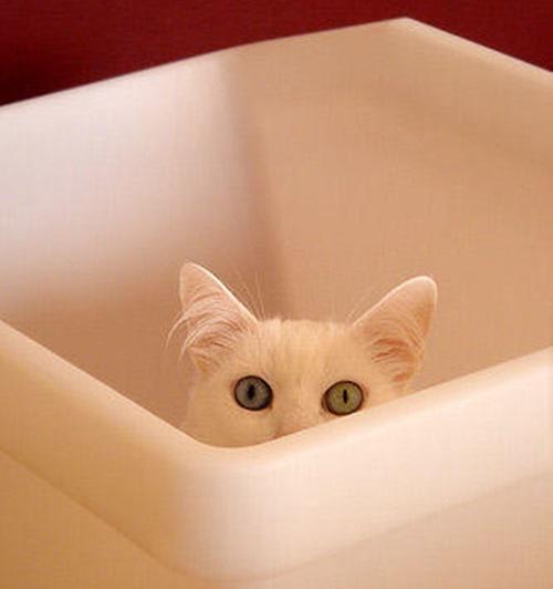 のぞき見猫