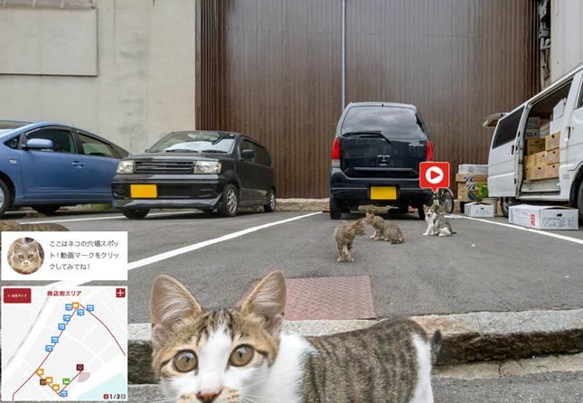 看板猫や地域猫がたくさん!