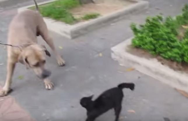 危険を察知した母猫は大型犬にアタック。