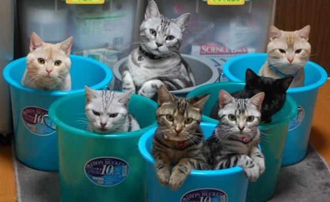 猫マンション