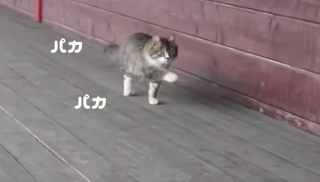 パカパカ歩く猫。