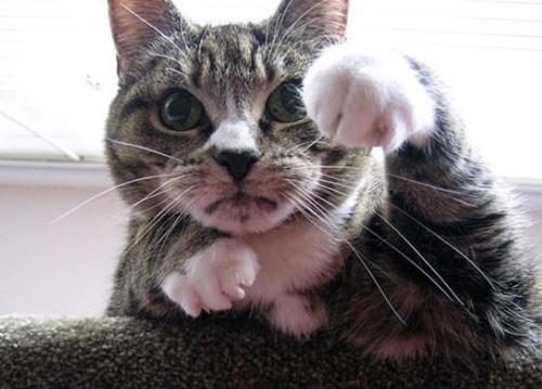 招く気マンマンな猫!