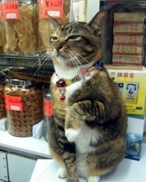 プロ招き猫。