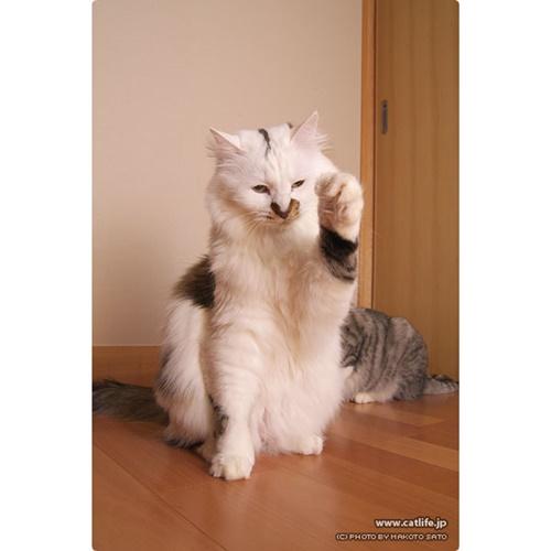ふわふわ招き猫!