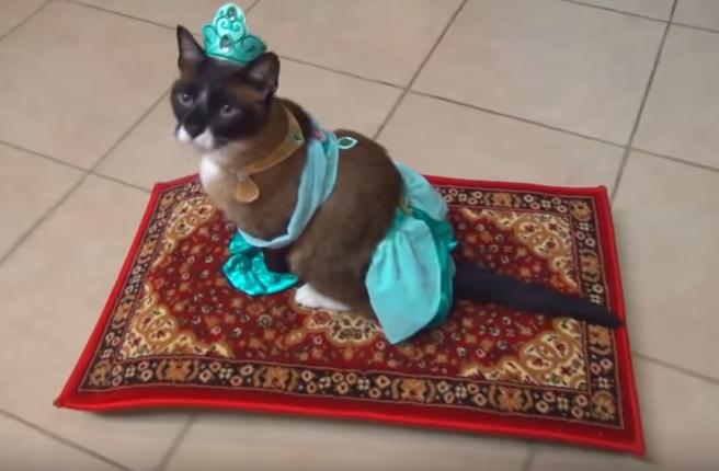 ルンバ猫動画まとめ!