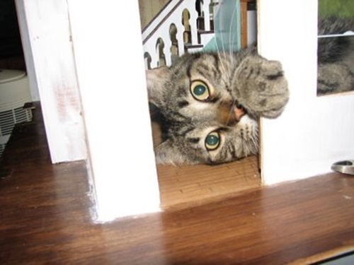 巨猫怖い!