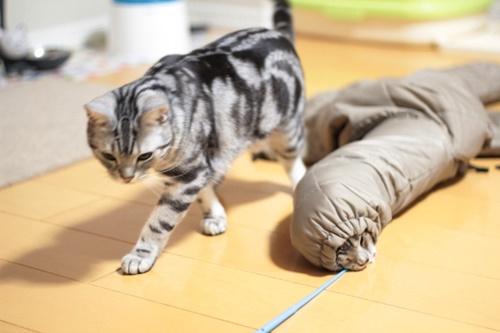 普通の猫と新生物。