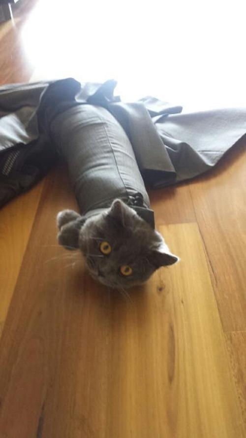 とにかくパンパンな猫。