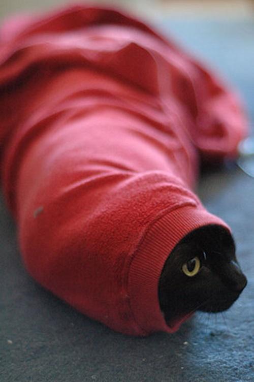 ツチノコ猫発見!