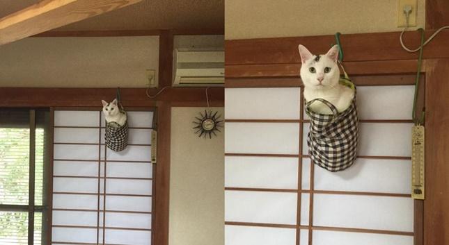 猫なぜそこに?