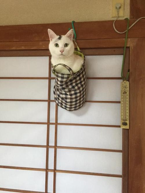猫ですね・・・