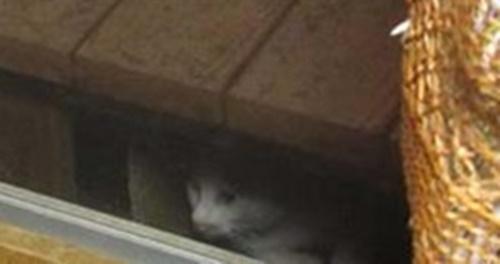 何とも不安げな猫。