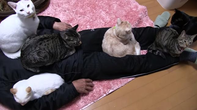 まさに猫天国。