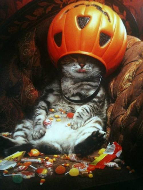 ハロウィンを最高に楽しむ猫。