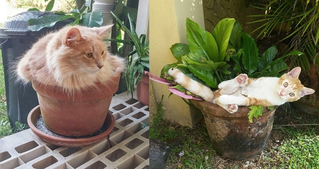 猫と植木鉢。