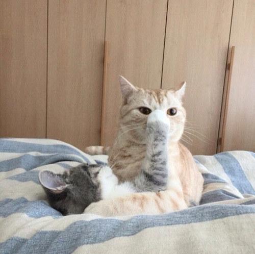 メッてする猫、される猫。