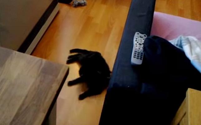 全然抵抗しない猫。