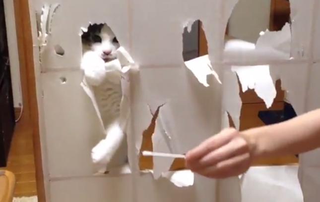 障子をやぶる猫。