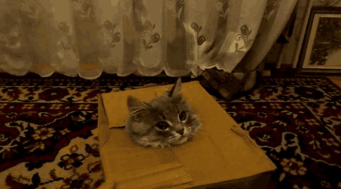 猫達のカワイイ失敗アニメGIF画像。