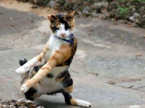 ライダー猫の変身ポーズ。
