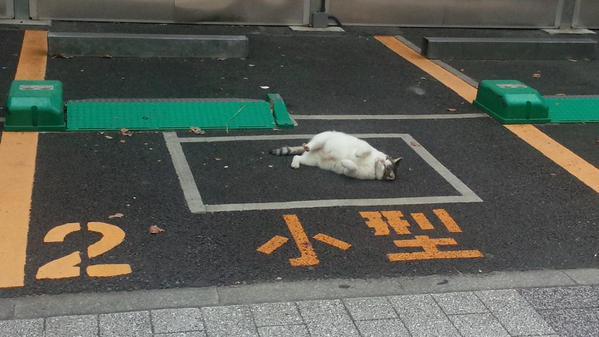 駐車場を使用する猫。