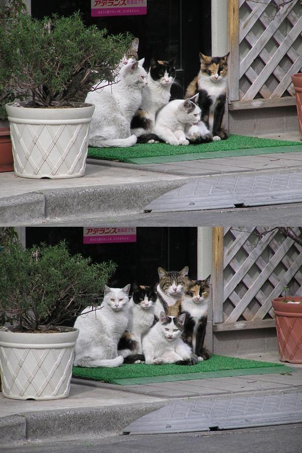 猫達の振り向きショット!