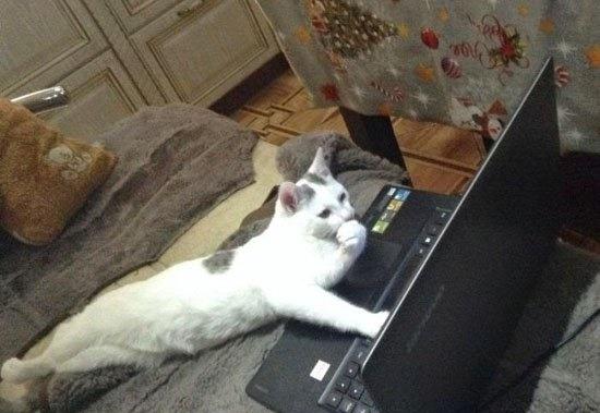 猫サーチ。