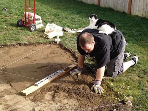 働いてようが甘えん坊な猫。