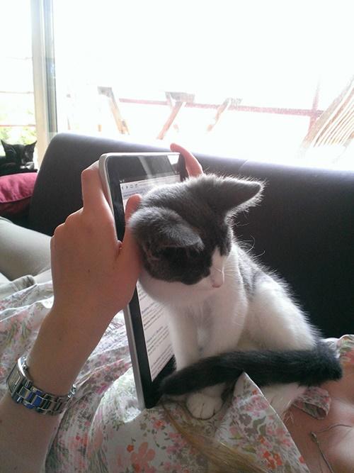 全力甘えん坊猫。