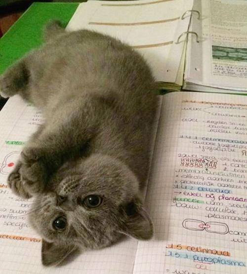 可愛すぎるので勉強やめます。