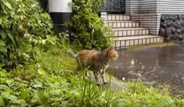 猫も困ってる様子。