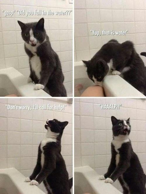 膝の匂いでフレーメンな猫。