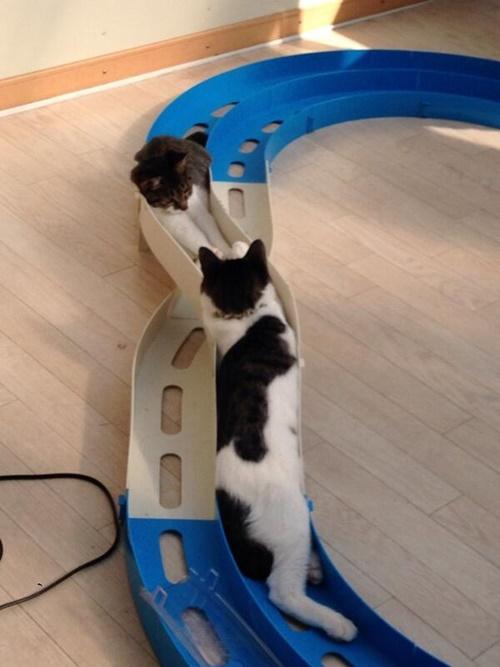 ミニ猫駆。