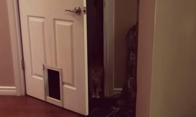 さらに出来る猫は・・・。