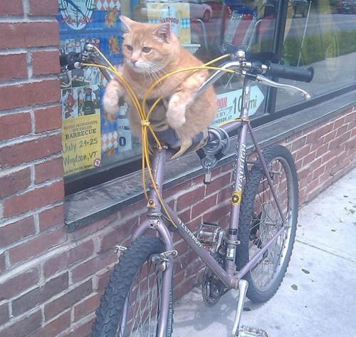 自転車で待機中!?