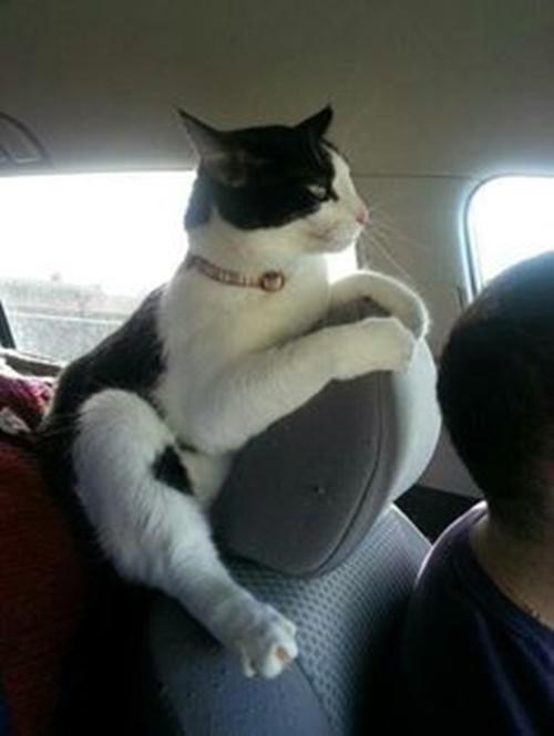 車慣れすぎて姿勢がおかしい。