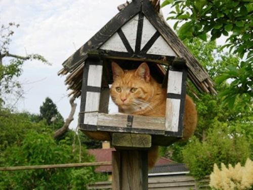多分鳥さんのお家。