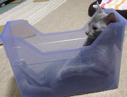 なぜか無になる猫。