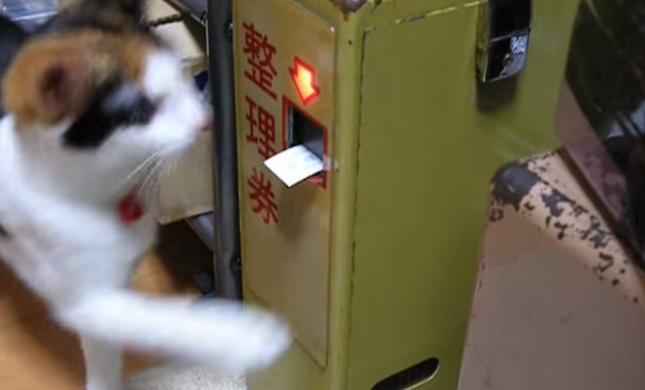 整理券に興味津々の猫。