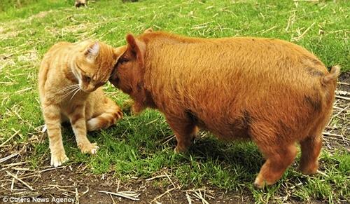 大好きな豚にはスリスリ!